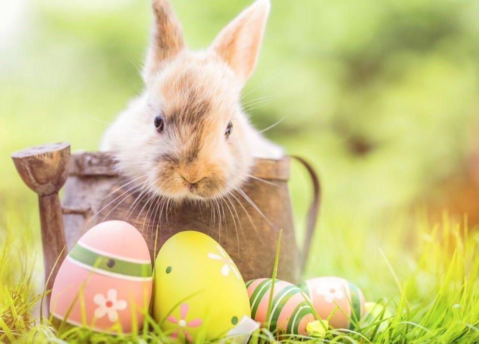 🐰🐰🐰 Das Team vom Gasthaus Zum-Schad wünscht allen Gästen und ihren Familien trotz der aktuellen Situation ein wunderschönes Osterfest. Genießt die Sonne und bleibt alle gesund 🐇 🐇🐇